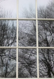 Trees Reflection - Friends Seminary Window K-12