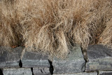 Pampas Grass on a Stone Wall