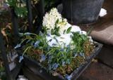 Hyacinth Stoop Planter
