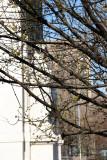 Cornus Dogwood Tree Blossoms
