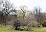 Garden View - Willow Trees