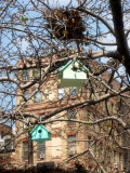 Bird Houses & a Squirrels Nest