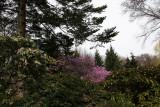 Rock Garden - Azalea, Pieris, Witch Hazel...