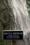Birch Tree Bark