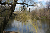 Lake View under a Willow Tree toward CPW
