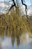 Lake, Willow Tree & Beresford Apartment Towers