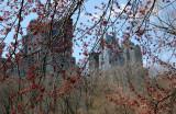 Maple Tree Foliage - Central Park South Horizon