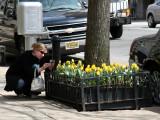 Photographing the Tulip Street Garden