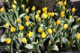 Tulip Street Garden