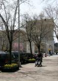 Spring View toward the Washington Square Arch