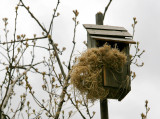 A New Nest for the Birdhouse by the Pear Tree