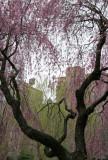 Cherry & Willow Tree with Village Skyline