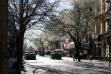 Pear Trees in Bloom - East Horizon