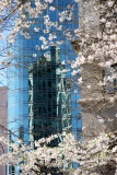 Astor Place Glass Tower & Cherry Tree Blossoms