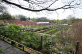 Rose Garden & Cherry Tree Orchard View