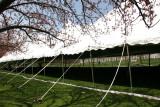 apanese Cherry Blossom Festival Tent