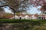 Japanese Cherry Blossom Festival Tent
