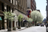 NYU Buildings with Pear Trees in Bloom