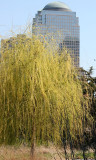 Willow Tree & Financial Center Skyline