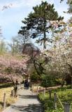 Garden View - Japanese Pond Garden