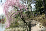 Garden Path View - Japanese Pond Garden