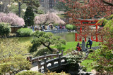 Japanese Pond Gardens - Brooklyn Botanic Gardens