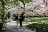 Garden View - Cherry Tree Grove