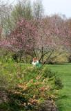 Quince & Garden View
