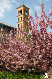 Judson Church Bell Tower - Cherry Tree Blossoms