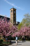 Judson Church & Cherry Tree Blossoms