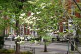 Dogwood & Washington Square North