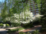 Dogwood, Willow & Crab Apple Trees