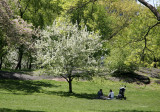 Family Outing near an Apple Tree in Bloom