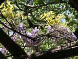 Wisteria Arbor at West 72nd Street