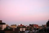 Rose Sunrise - West Greenwich Village