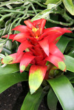 Bromeliad - Caribbean Garden Show