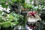 Bromeliads, Orchids & Unknown Plants- Caribbean Garden Show
