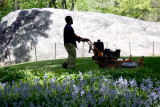 Mowing Grass Season - Central Park