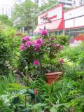 Garden View - Rhododendron