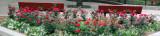 Corner Garden - Roses