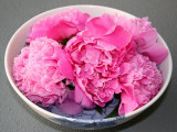 Pink Peonies in a Blue & White Peony Bowl