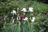 Garden View - Iris