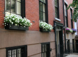 Window Flower Boxes - Northeast View from 5th Avenue