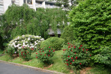 Garden View - Rhododendron & Roses in Bloom