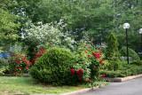 Garden View - Red Roses & Mock Orange