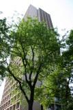 Locust Tree  & I M Pei Beehive Condominium
