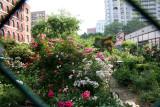 Garden View Through a Chain Link Fence