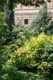 Roses, Weigela, Juniper, etc.