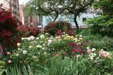 Garden View - Roses