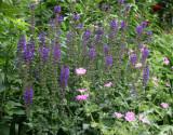 Salvia & Geranium